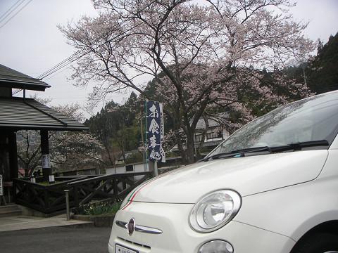 桜と500と