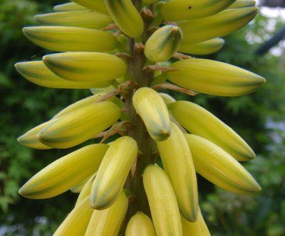 0-banana1x.jpg