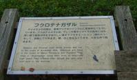 fukurotenagazaru_20121227101402.jpg