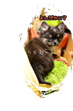 黒猫まめちんのコピー