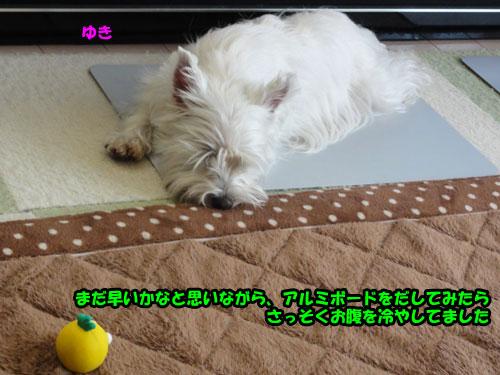 DSC07589.jpg