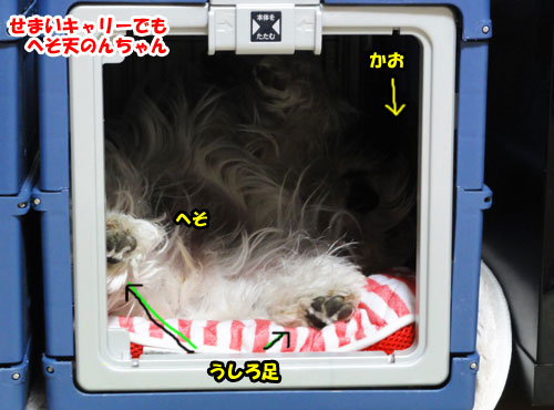 DSC07867.jpg