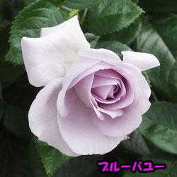 DSC07979.jpg