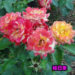 DSC07988.jpg