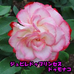 DSC08002_20120616181049.jpg