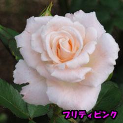 DSC08018_20120616181047.jpg