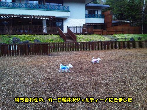 NEC_0776s.jpg