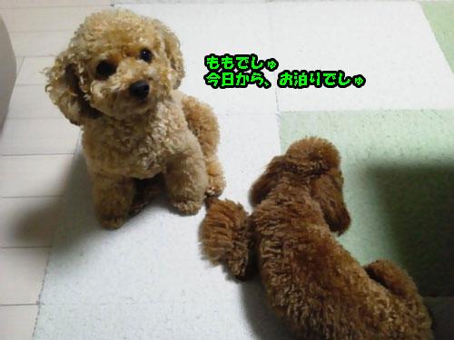 NEC_0852_20120607215633.jpg