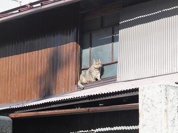 matsumoto96.jpg