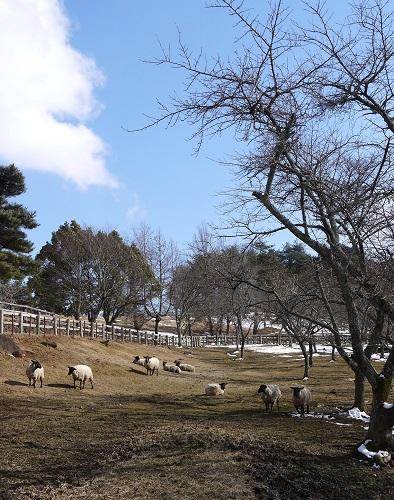 kamehati-sekijyuku1302-027b.jpg
