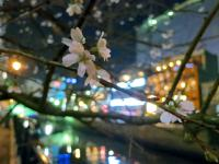 BL121207堀川夜景2IMG_0712
