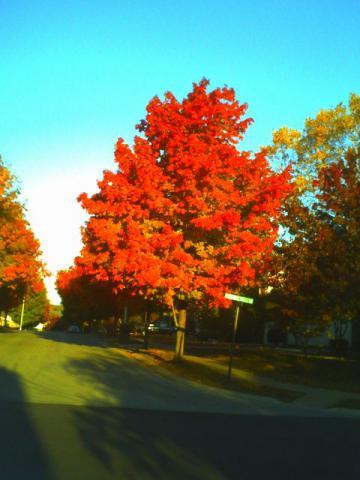2012年10月終わりの紅葉