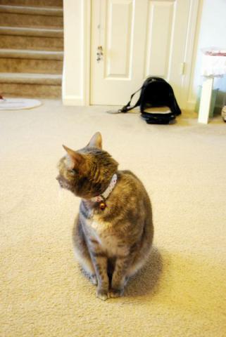 キャリーがひとつ ネコひとり