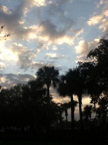 Orlando 5