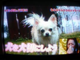 犬&山口愛実