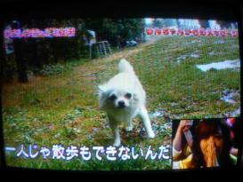 犬&希志あいの