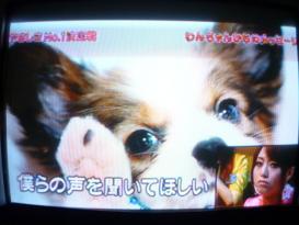 犬&吉沢明歩