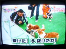 ケンドーコバヤシ&犬