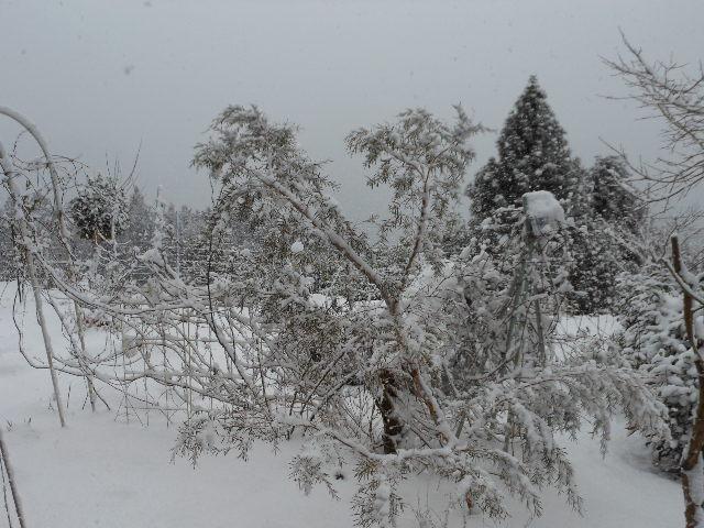 今日の雪は凄い。1