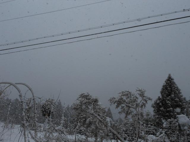 今日の雪は凄い。2
