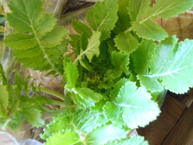 土付きお野菜の比較2