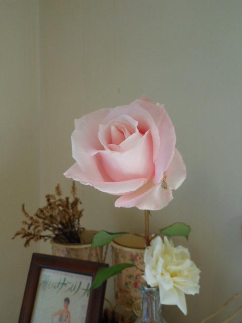 オードリー・ヘプバーンのバラ。