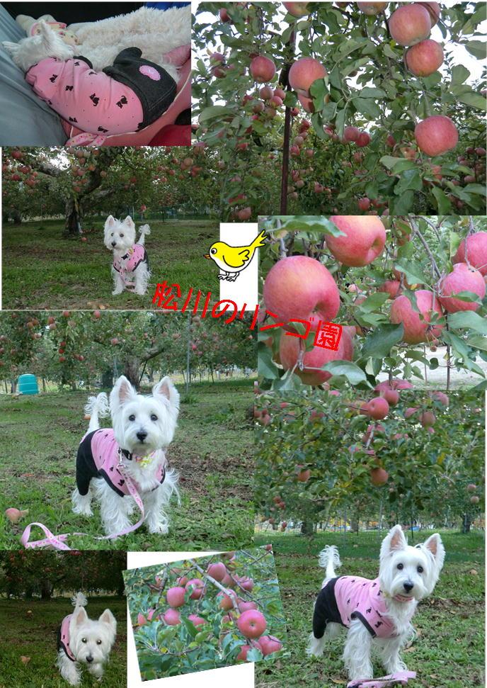 松川リンゴ園