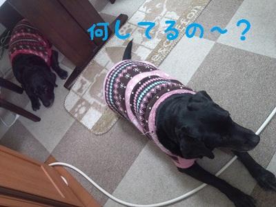 20121213marian.jpg