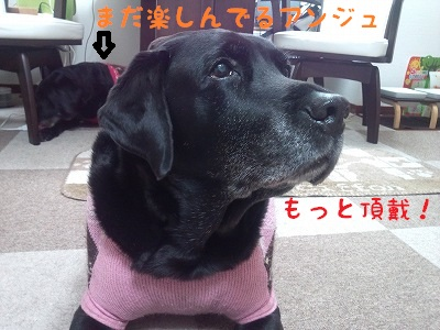 20121213marine3.jpg