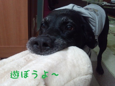 20121215ange1.jpg