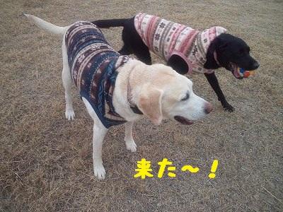 20130113kotaroukoyuki2.jpg