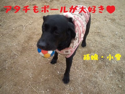 20130113koyuki1.jpg