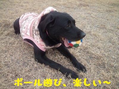 20130113koyuki_2.jpg
