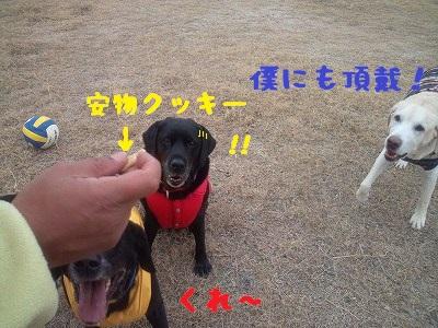 20130113marinekotarou1.jpg