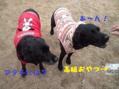 20130113marinekoyuki1.jpg