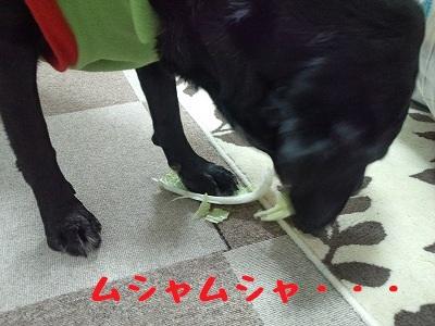20130127ange3.jpg