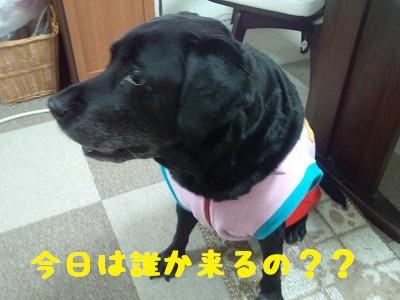 20130127marine4.jpg