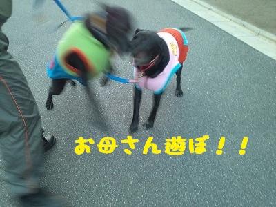 20130127marineange1.jpg