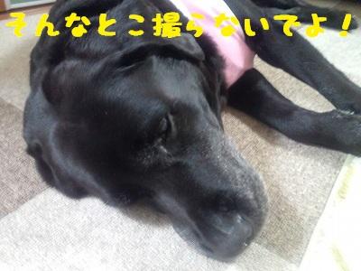 20130328marine3.jpg