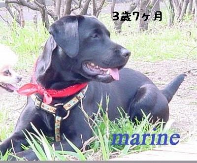 marine2_20130221223906.jpg