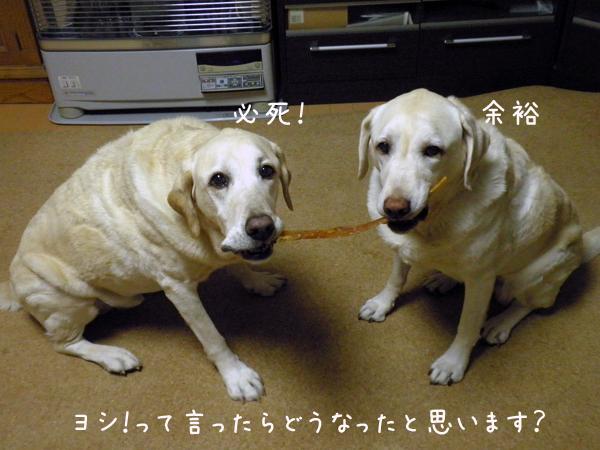 1_20121112204155.jpg