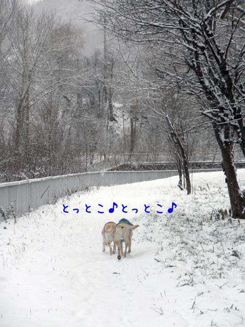 1_20121130210110.jpg
