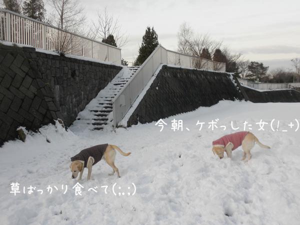 1_20121203194635.jpg