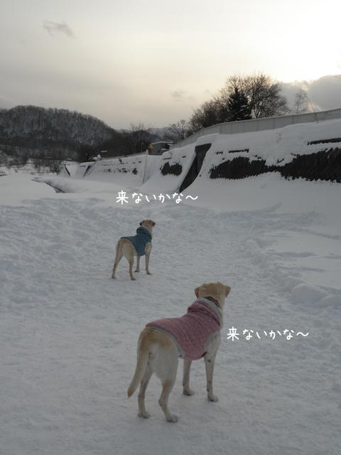 1_20121221235729.jpg