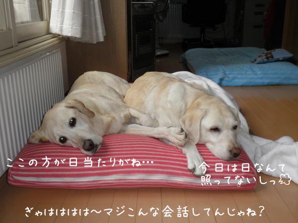 22_20121104212205.jpg