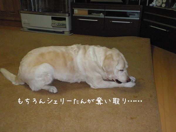 2_20121112204154.jpg