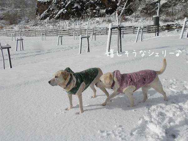 2_20121119194200.jpg