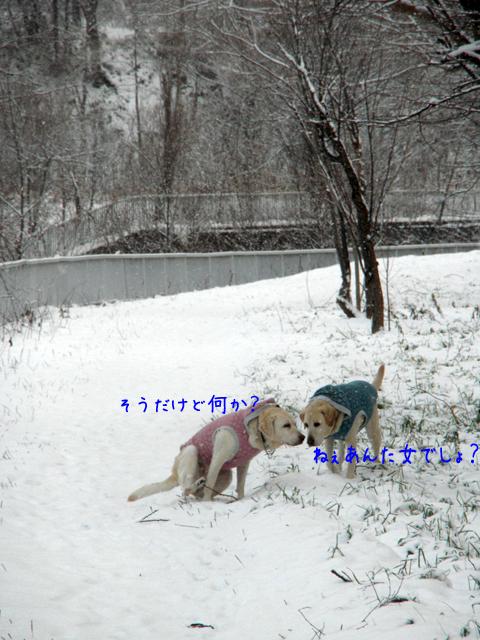 2_20121130210118.jpg