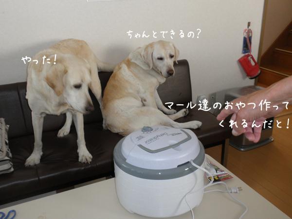 3_20120914221220.jpg