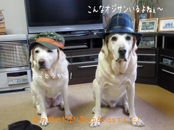 3_20121010213409.jpg